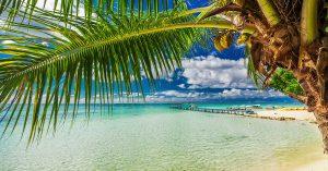 beach with palm tree French Polynesia