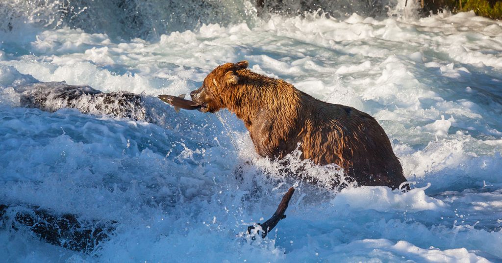Best time to cruise to Alaska Wildlife