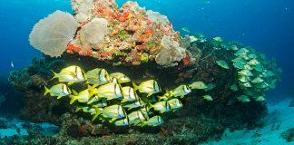 Ba'a MSC Cruises Ocean Cay