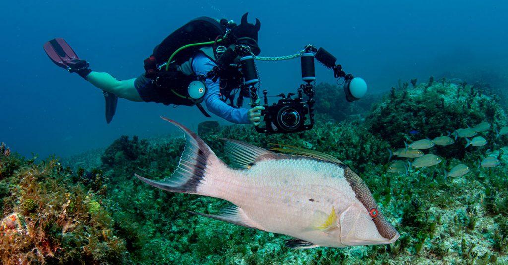 Ba'a Marine life around Ocean Cay JOHN NUSSBAUM